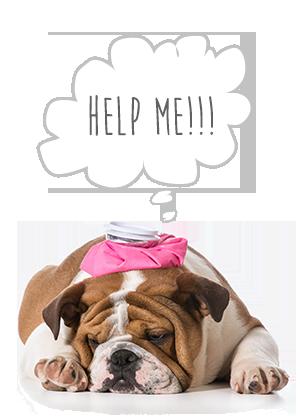 assicurazione-cane-sinistri